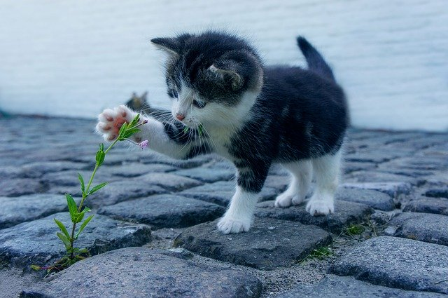 Kittens attacking flowers!